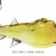 3G Shark Pipe (20cm)